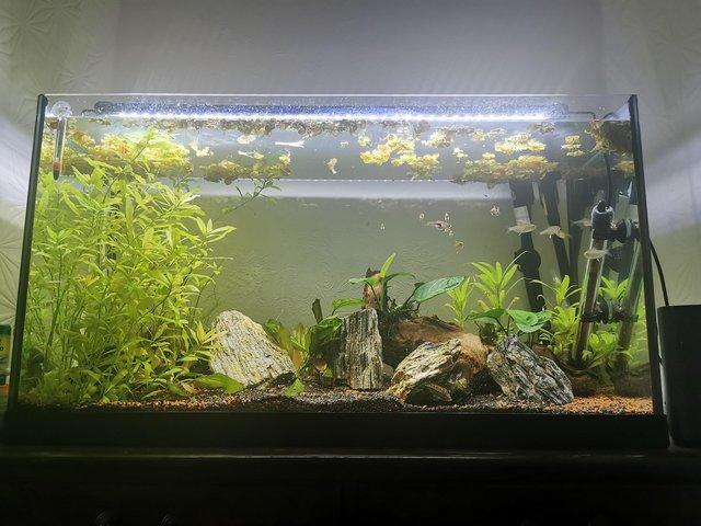 Preview of the first image of Fluval 207 External Filter Only.