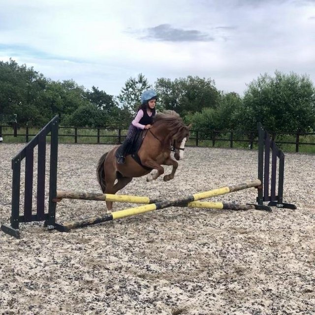 Image 3 of 11.3hh registered Welsh Section A