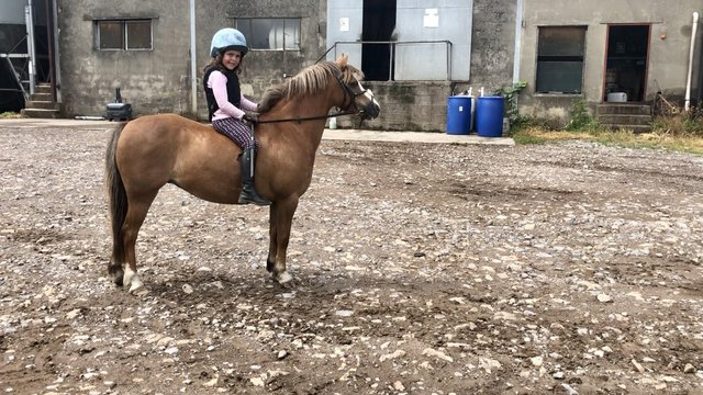 Image 4 of 11.3hh registered Welsh Section A