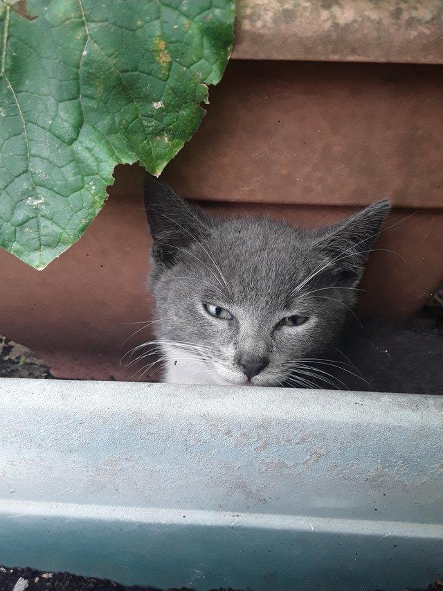 Image 2 of ....Kitten Has Now been rehomed......