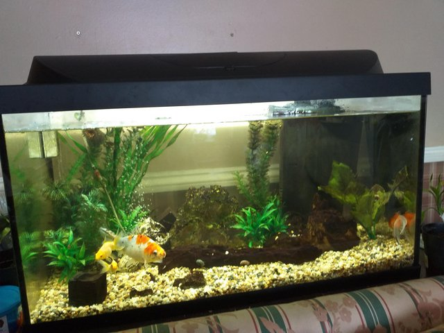 Image 2 of Full set up cold water fish tank.