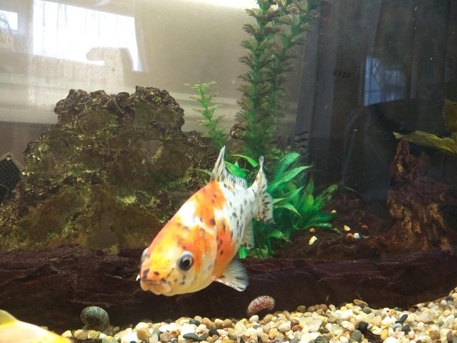 Image 4 of Full set up cold water fish tank.