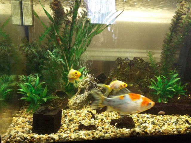 Image 5 of Full set up cold water fish tank.