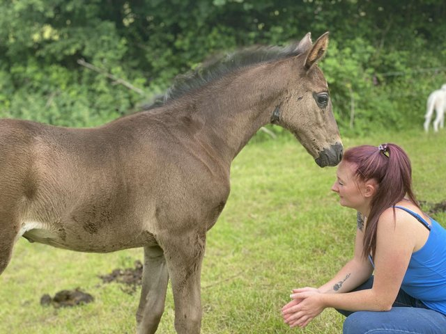Preview of the first image of Outstanding dressage filly for sale.