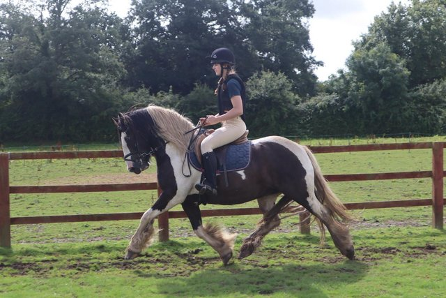 Image 10 of Vincent 14.1hh 6yo gelding for share in Arborfield