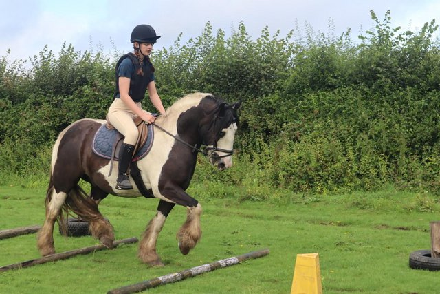 Image 11 of Vincent 14.1hh 6yo gelding for share in Arborfield
