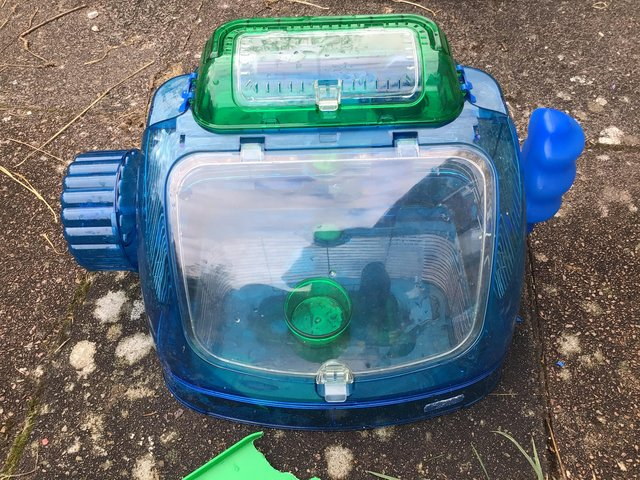 Preview of the first image of Large dwarf hamster carrier blue neon.