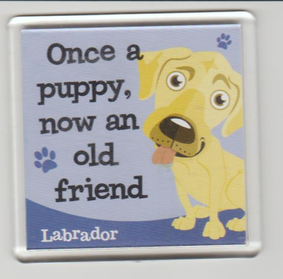 Preview of the first image of Fridge magnet  Labrador (see scan).