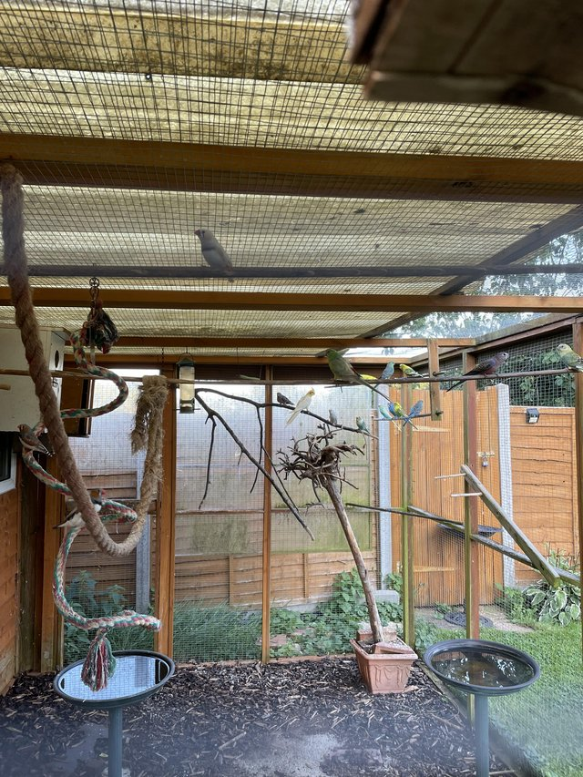 Preview of the first image of Bird aviary for sale. Inner flight and outer flights..