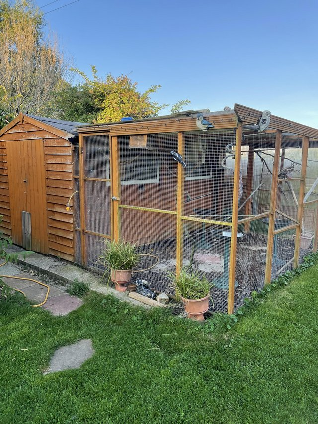 Image 4 of Bird aviary for sale. Inner flight and outer flights.