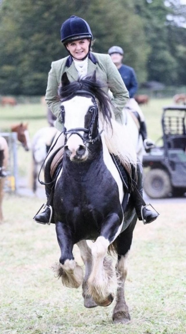 Preview of the first image of Vincent 14.1hh 6yo gelding for share in Arborfield.