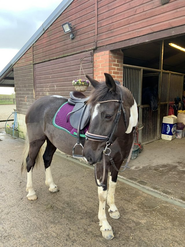 Image 2 of 15.2hh mare for share, Chaldon.
