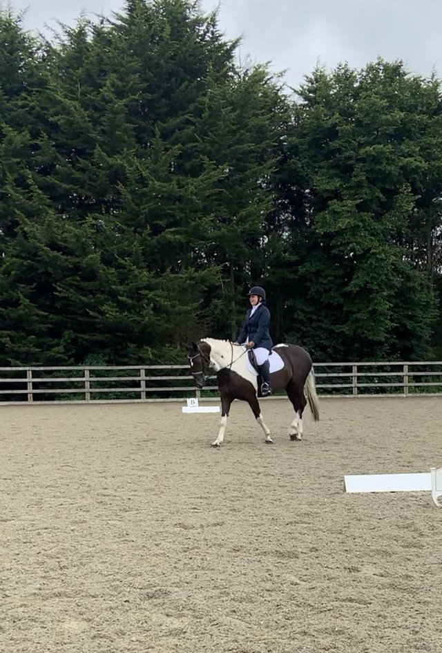 Image 3 of 15.2hh mare for share, Chaldon.