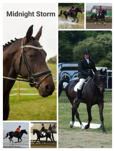 Preview of the first image of 16.3hh warmblood for part loan.