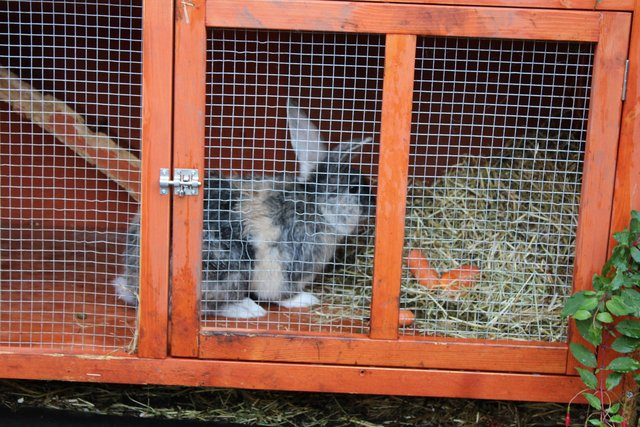Image 4 of RABBIT, 6FT DOUBLE HUTCH + XTRAS