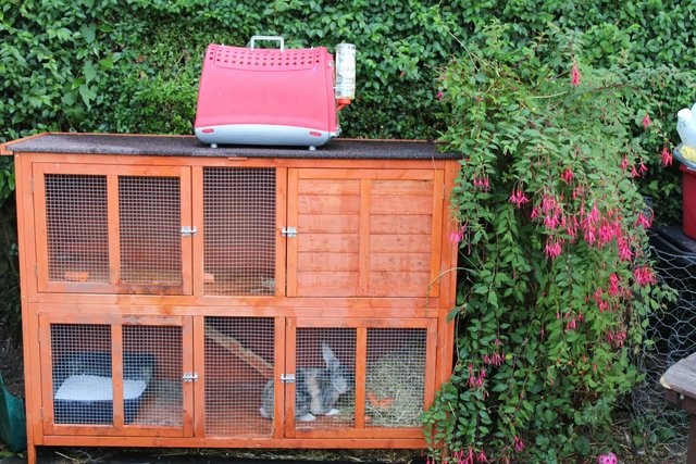 Image 5 of RABBIT, 6FT DOUBLE HUTCH + XTRAS