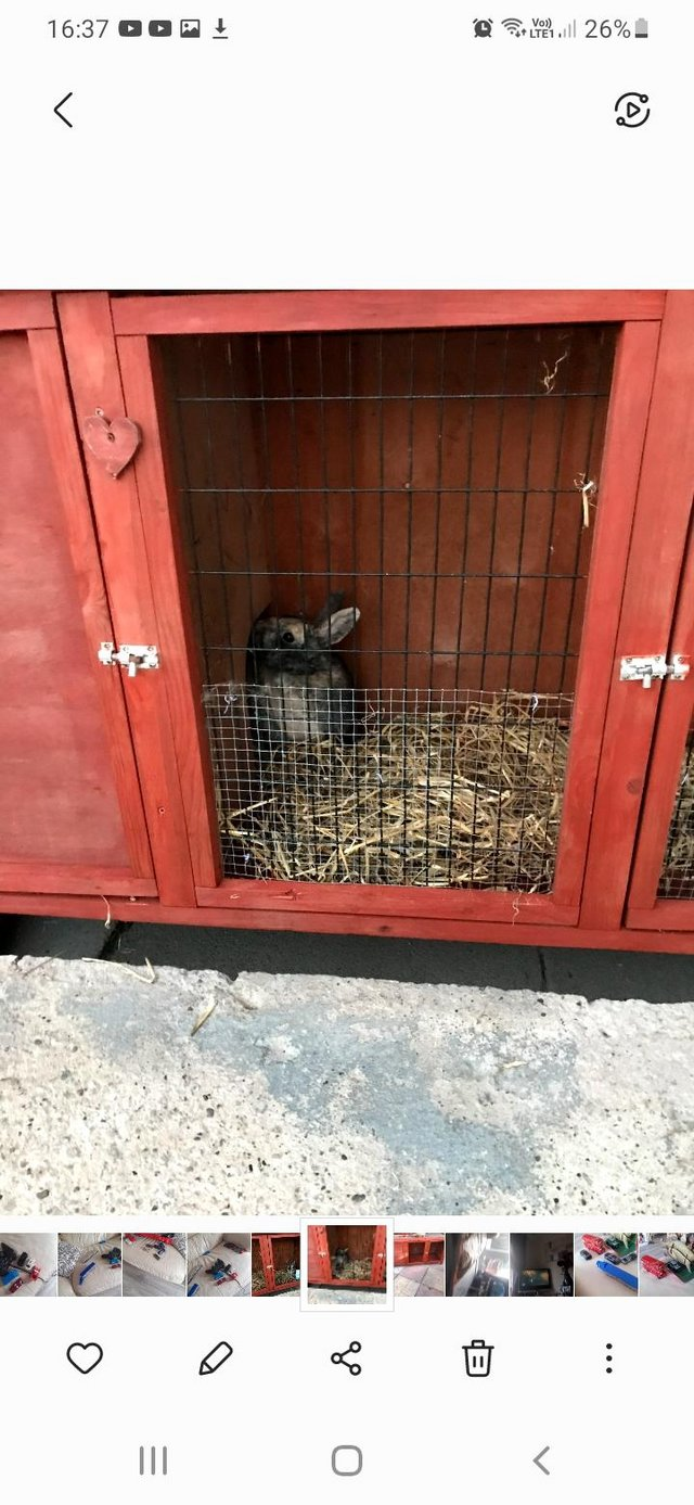 Image 3 of 12 month old rabbit and hutch for sale