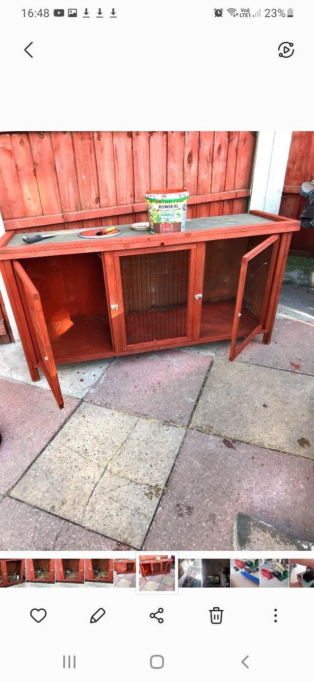Image 4 of 12 month old rabbit and hutch for sale