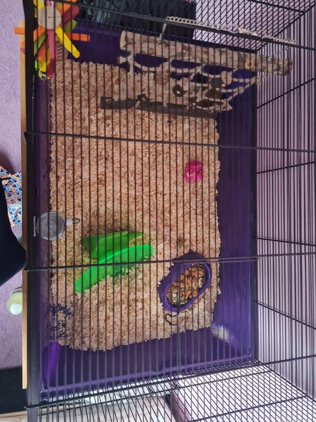 Image 2 of Hamster, cage and accessories