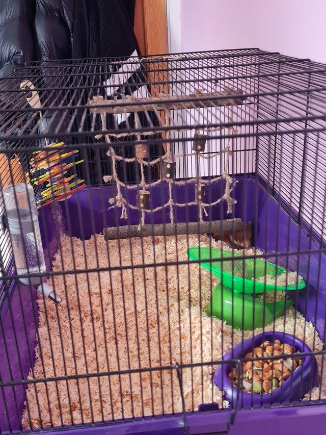 Image 6 of Hamster, cage and accessories