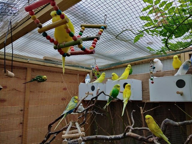 Image 2 of Birds wanted for outdoor aviaries
