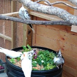 Image 3 of Birds wanted for outdoor aviaries