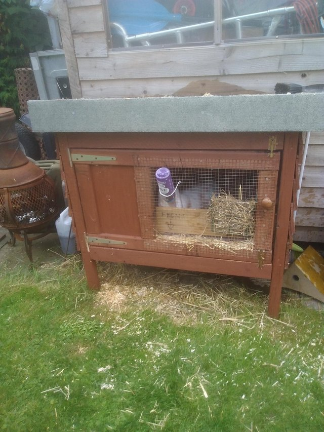 Image 2 of 15 month rabbit white and tan. Rabbit hutch and accessories