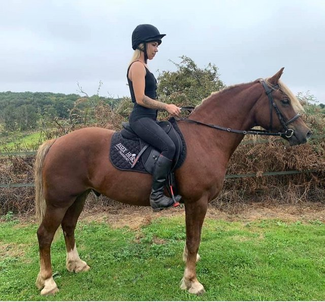 Image 7 of *STUNNING* Show Type, Full up Welsh C Project Gelding