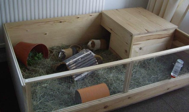 guinea pig run in the home protects from the winter months