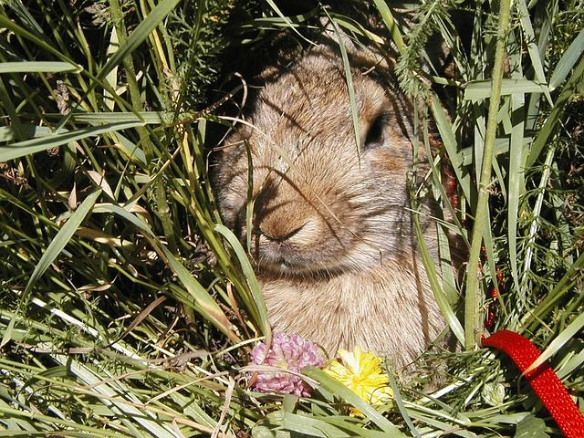rabbit hiding