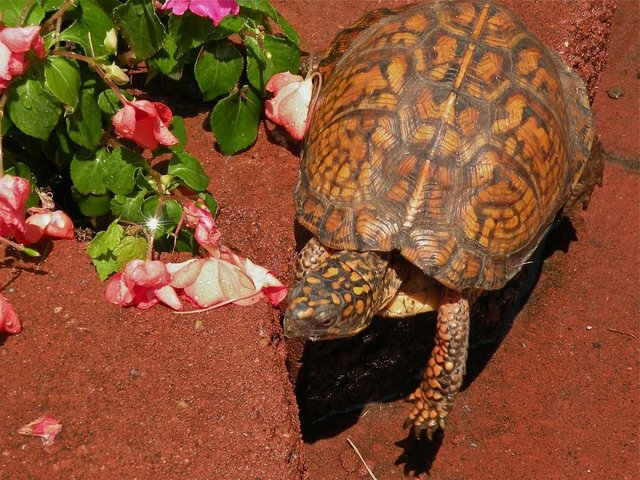 Tortoise Breed List And Care Guide Preloved Uk