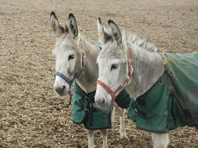 donkeys in rugs