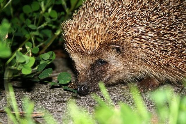 Keep hedgehogs safe this Bonfire Night!