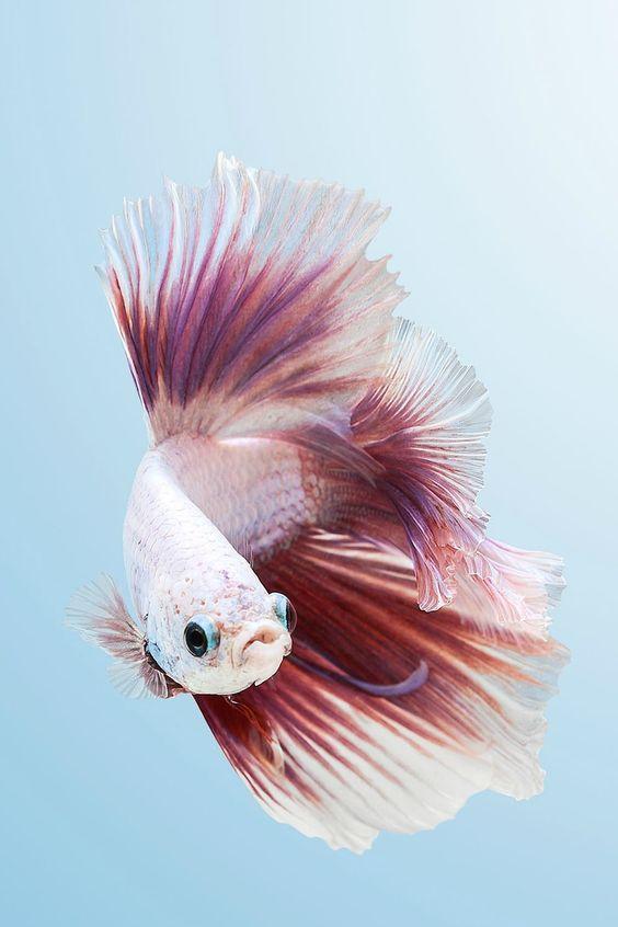 Keeping Betta Fish | Betta Fish Care Preloved Uk