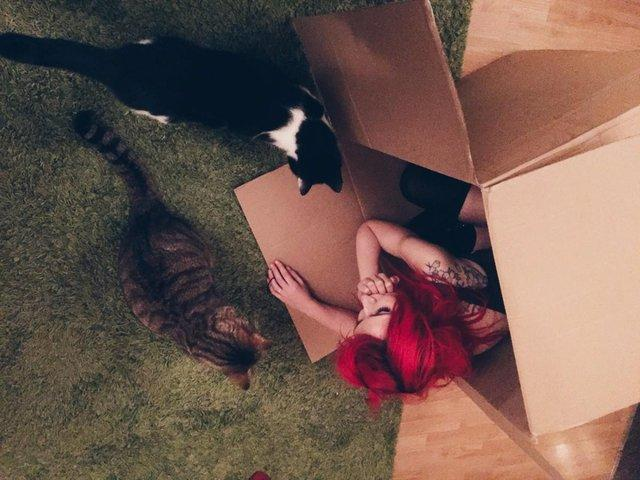 cats and girl in box